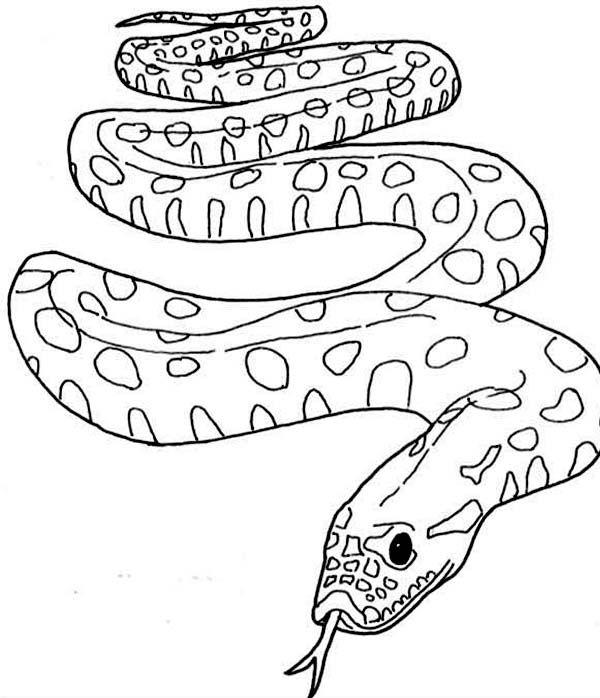 Anaconda Famous Snake From Amazon Anaconda Coloring Page Snake Coloring Pages Coloring Pages Animal Coloring Pages