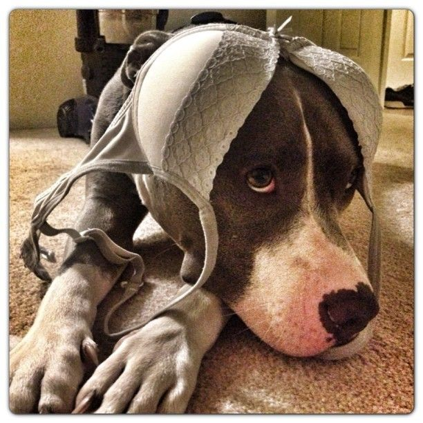 Ear warmers. The things we do to our pets to amuse ourselves. That's the truth