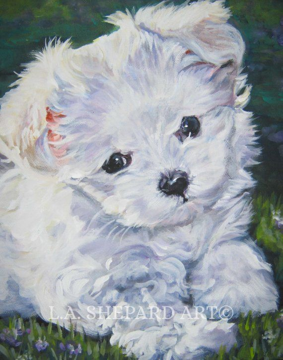 Maltese Dog Art Portrait Canvas Print Of La Shepard Painting 11x14