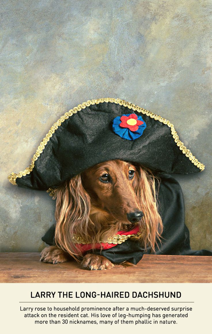 Small Dogs With A Napoleon Complex - Carmichael Collective