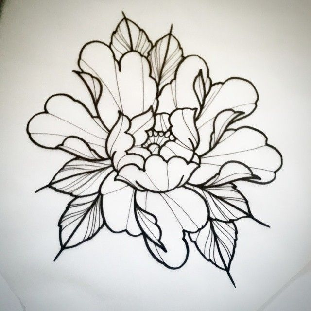 Peony Line Drawing Tattoo : Best peony drawing ideas on pinterest