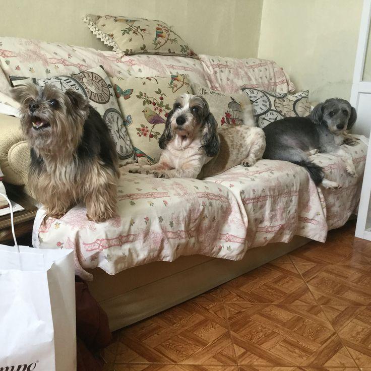 Os meus cães...