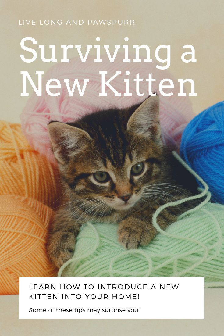 7 Helpful Tips For Introducing A New Kitten To Your Home Live Long And Pawspurr Cat Training Cat Advice Kitten