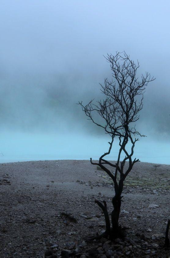 Kawah Putih. Kering. Beberapa pohon terlihat kering dan mati, mungkin terkena kepulan asap panas yang kadang muncul.