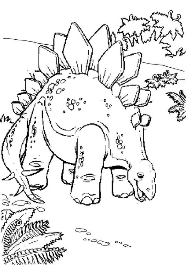 Stegosaurus Coloring Pages For Kids Dinosaur Coloring Pages
