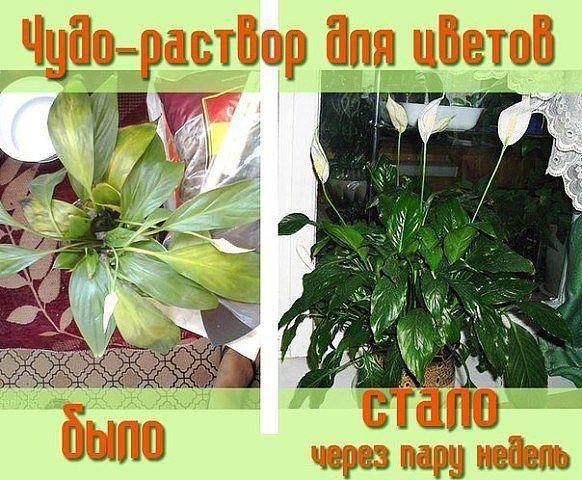 Чудо-раствор для роста цветов