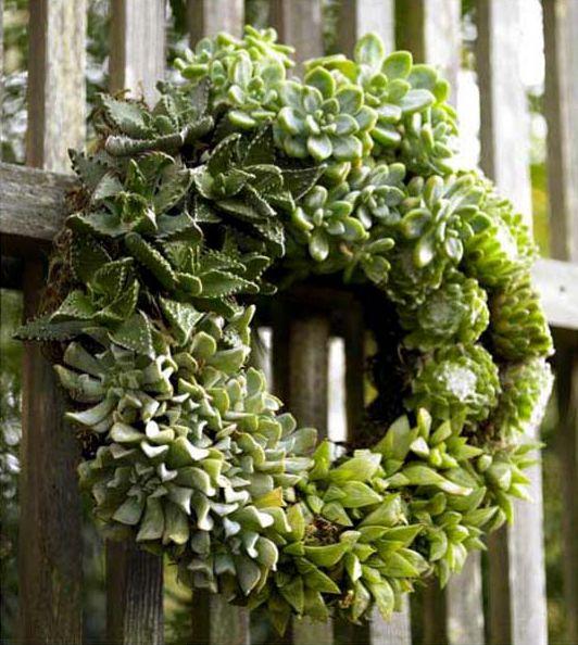 *THE GREEN GARDEN GATE*: THE SUCCULENT PLANT ECHEVERIA IS NOT THE SAME AS HOUSELEEK