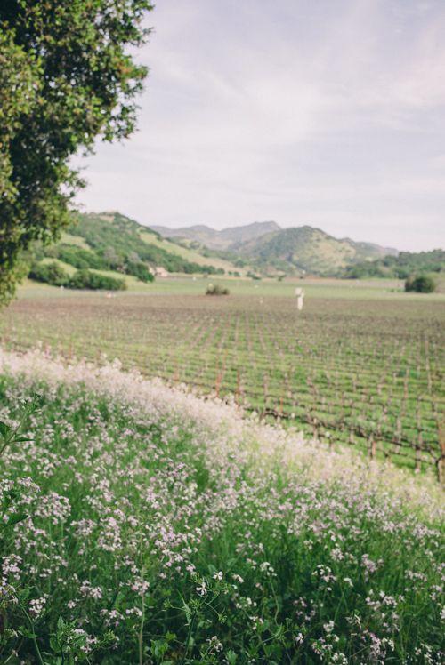 Napa vineyards and wild flowers