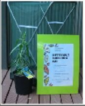 Butterfly lifecycle kit - starts with eggs on host plant so you can see the whole lifecycle.