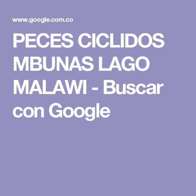PECES CICLIDOS MBUNAS LAGO MALAWI - Buscar con Google