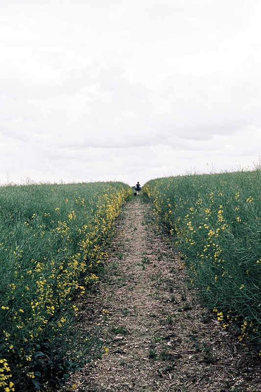l'antipodeuse: Wiltshire, EnglandAdventure, Inspiration, Nature, Beautiful, Remain Simple, Wiltshire England, Places, Flower Fields, Bridges Paths G8Way