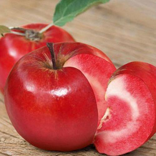 Новый осенний сорт с декоративными красными листьями. Высота дерева не превышает 2,5 метра. Очень декоративны. Весной долго украшают сад цветками насыщенного тёмно-розового цвета. Плоды,  массой  в среднем  150 г,  ярко-красные  не только снаружи, но и внутри! Розово-красная мякоть сочная, вкус тонкий с лёгким оттенком лесных ягод. Плоды имеют высокое антиоксидантное содержание (на 30-40% больше, в обычном яблоке). Зимостойкость высокая до – 33 град. Плодоношение на 2 год, урожайность…