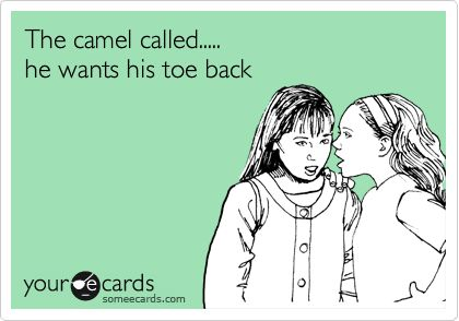 The camel called... he wants his toe back. #ecard: Cameltoe, Funny Stuff, Camel Called, Humor, Things, So Funny, Can'T Stop Laughing