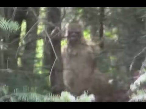 Giant Bigfoot Caught on Camera 2016 (Real Sasquatch Proof/Evidence)