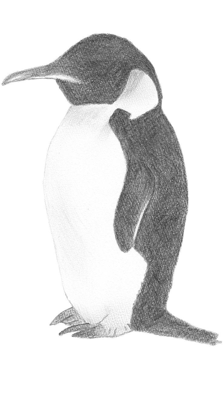 エンペラーペンギンのデッサン