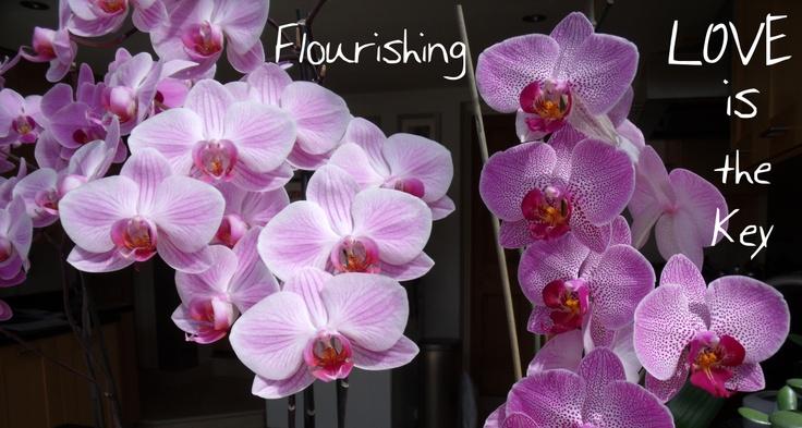 flourishing through Love