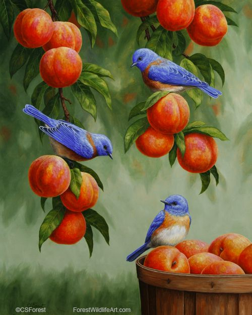 Oil painting of bluebirds in a peach tree, by wildlife artist Crista Forest…