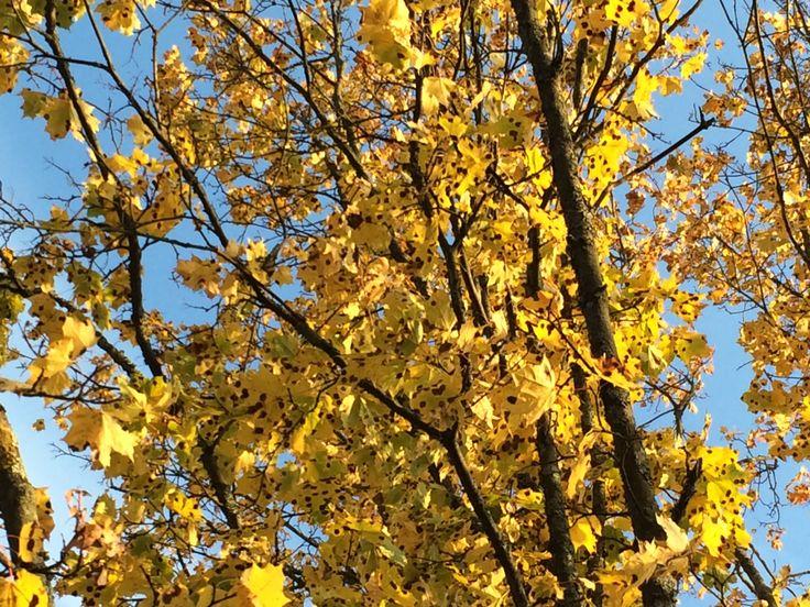 Yellow autumn!