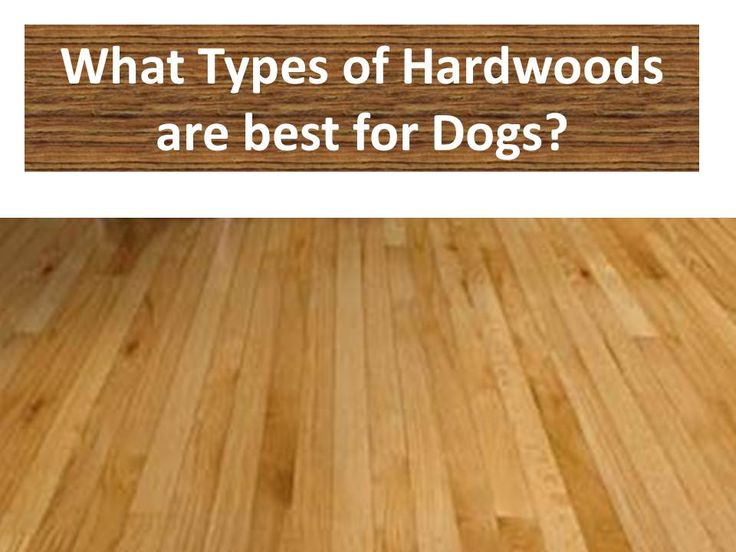 Yes, hardwood and pets can co-exist together.  This provides advice on types, species, color and finish that will hold up best for dogs (and other pets). #homeimprovement