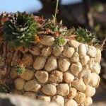 Čudesna biljka koju većina ima u vrtu: Liječi uhobolju, štitnjaču, kožne bolesti…