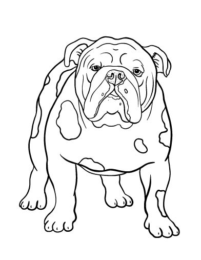 school bulldog coloring pages - photo#10