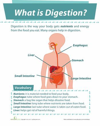 20 best digestive system images on pinterest life science teaching ideas and body systems. Black Bedroom Furniture Sets. Home Design Ideas