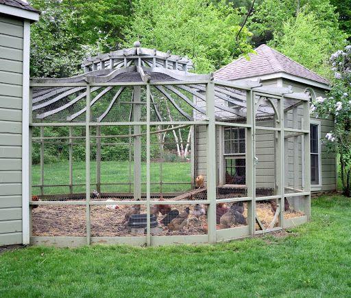 chicken aviary