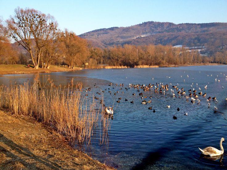lake in Linz Austria