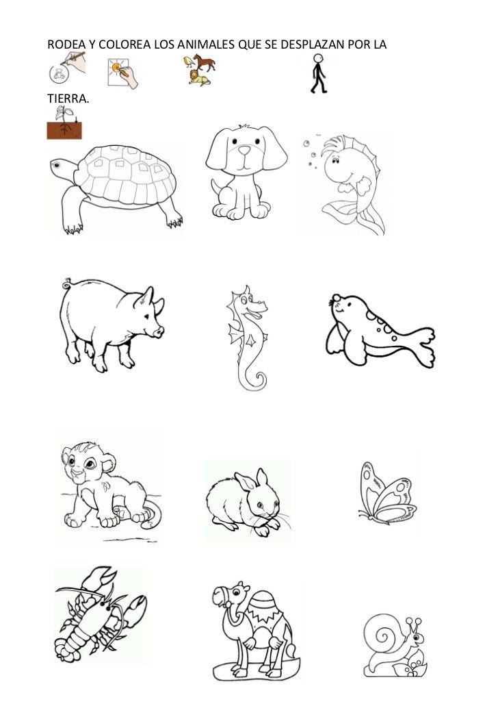 Los animales de la selva para colorear: http://www.edufichas.com ...