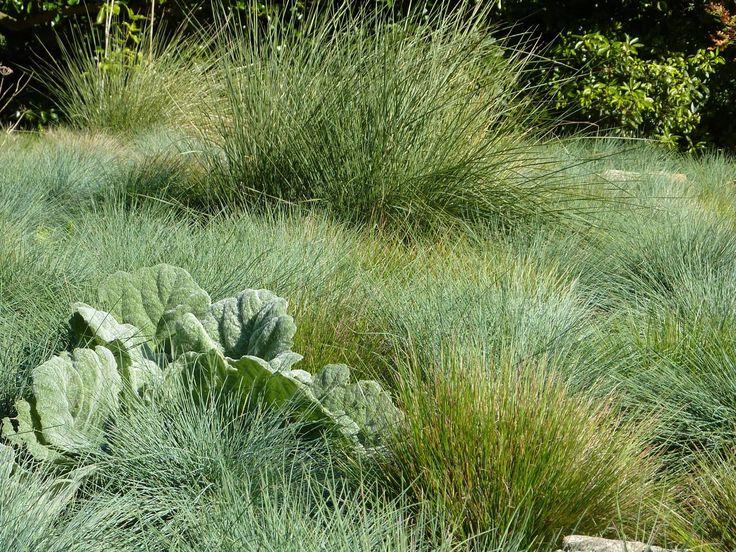 planting a garden, drought tolerant landscape design, modern planting design, on planting design gardens dry