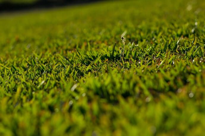 grama são carlos