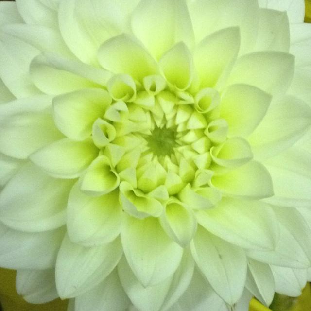 58 best September Flowers images on Pinterest   September blumen ...