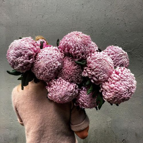 katie marx holding ravishing chrysanthemums. via @skinny_wolf on IG