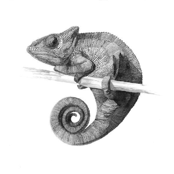 Mejores 41 imágenes de Фон en Pinterest | Acuarela, Animales de ...