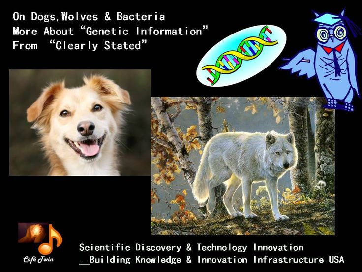 "On Dog, Wolf & Bacteria__How Genetic Mutation Evolves By ""Clearly Stated"" .""Genes to Future Medicine""  Café Twin"