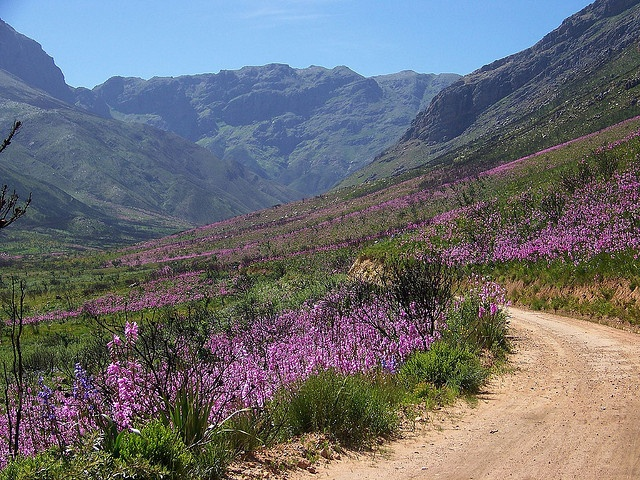 Jonkershoek - a kloof / reserve above Stellenbosch with the highest annual rainfall in the Western Cape. Wonderful walking trails.