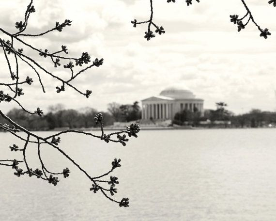 Minimalist print in black and white. Spring in DC for your home or office walls. Available in a variety of standard sizes and finishes. TITLE: DC Spring LOCATION: Washington DC ORIENTATION: Vertical / Portrait SIZE: Select a Size from the menu for a variety of standard options. FINISH: Choose Finish (Lustre, Metallic or Glossy) from menu. Photograph professionally printed on photography paper for years of enjoyment. Unless specified, prints are sold unframed and unmatted and will be ship...