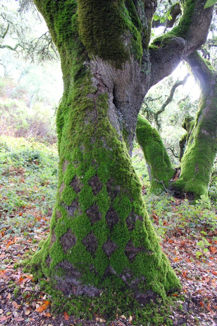 Moss Patterns 6