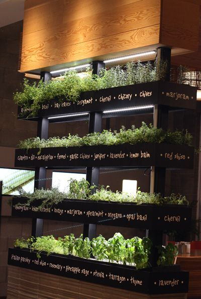 25+ Best Ideas About Herb Wall On Pinterest