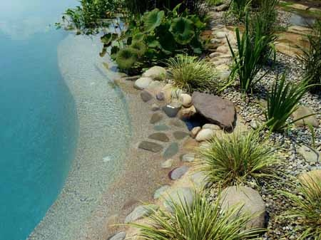 Swimming Pools Without Chemicals Use Plants And Microbes To Clean The Water Naturally Dream