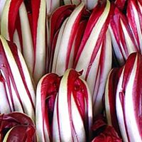 Italiaanse Bladgroente-bladcichorei