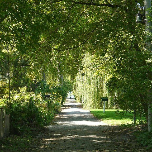 Pathways on Toronto Island