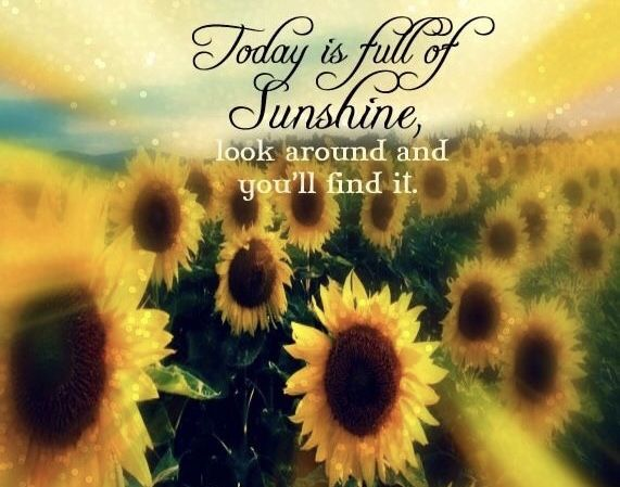 Pin By Living Cozy On All For The Love Of Sunshine Group Board Sunflower Pictures Sunflower Quotes Flower Quotes