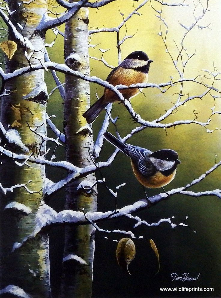 This nice chickadee print matches up perfectly with the cardinal print Winter Refuge. Winter Refuge II is available, as an open edition, in two different image sizes.