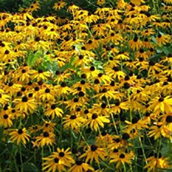 List of Deer and Rabbit Resistant Plants