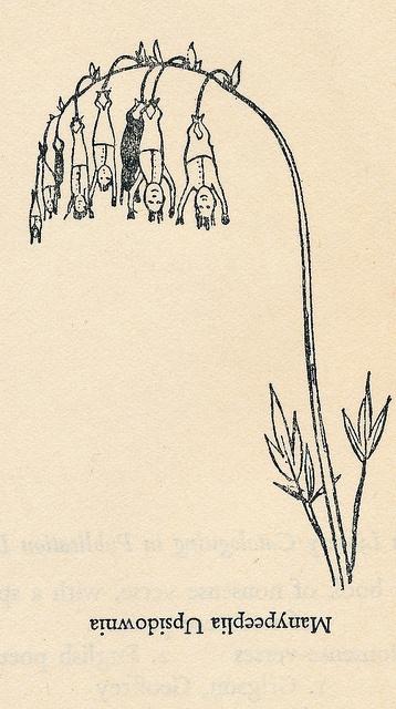 Edward Lear // manypeeplia upsidownia