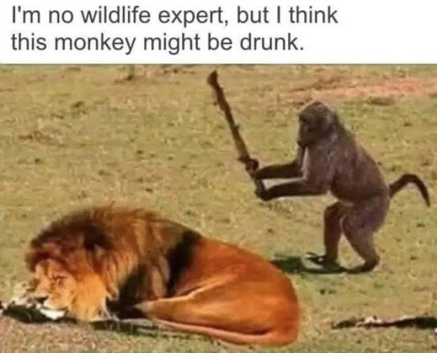 Funny Friend Sayings Monkey-ing Around | WT...