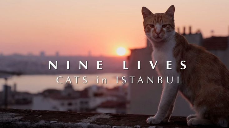 Nine Lives - Cats in Istanbul - TEASER. Nine Lives - Cats in Istanbul is a documentary feature focusing on the millions of street cats that ...