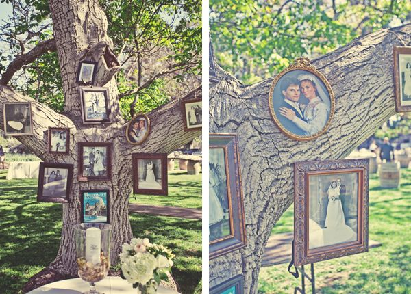 Photos on a tree.