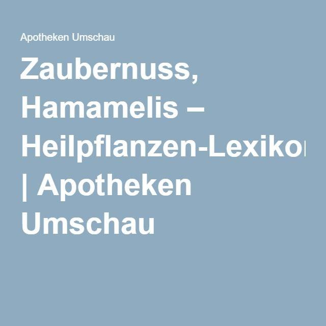 Zaubernuss, Hamamelis – Heilpflanzen-Lexikon   Apotheken Umschau
